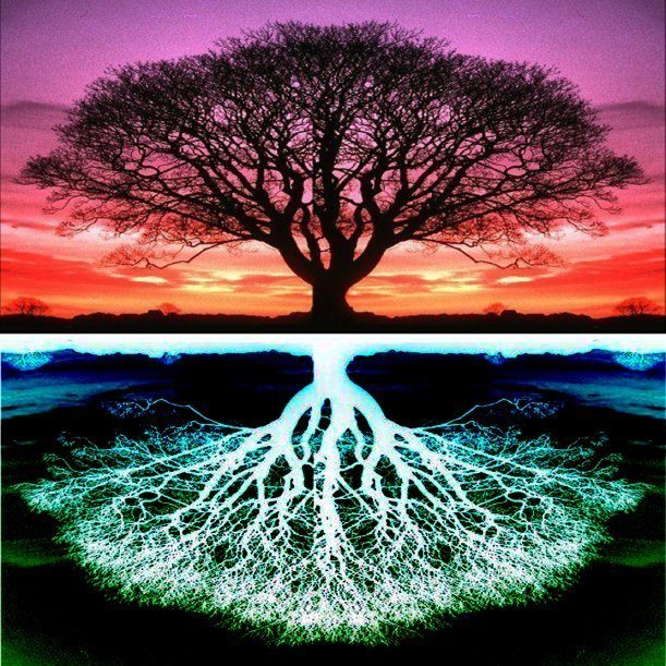 tree-of-life-branches