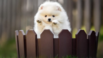 Fear Is The Highest Fence